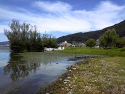 コンクリート護岸で覆われていた諏訪湖にかつての生き物豊かな湖岸を再生しました