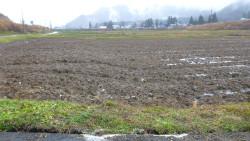 4.水田に認められる撓曲変形(地表地震断層) 飯森地区では、地表地震断層の連続が良い。姫川と平行するため、姫川の堰堤へ影響を及ぼして場所もある